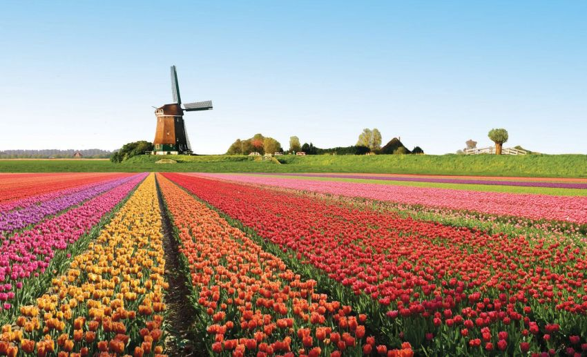 Tulipani - foto via viaggiamo.it