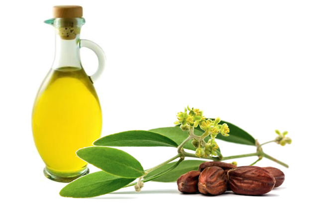 Olio di Jojoba - foto via ideegreen.it