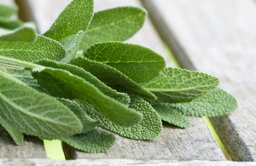 Tisana alla salvia - foto via www.cure-naturali.it
